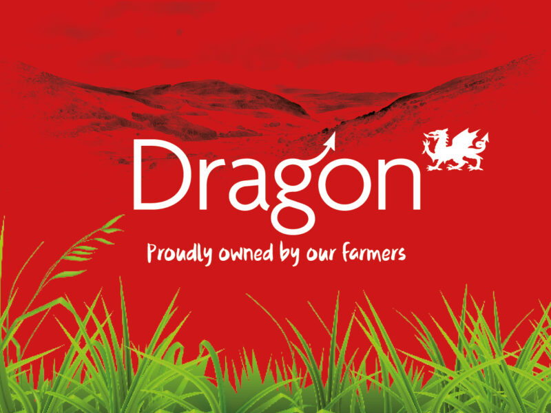Dragon - South Caernarfon Creameries