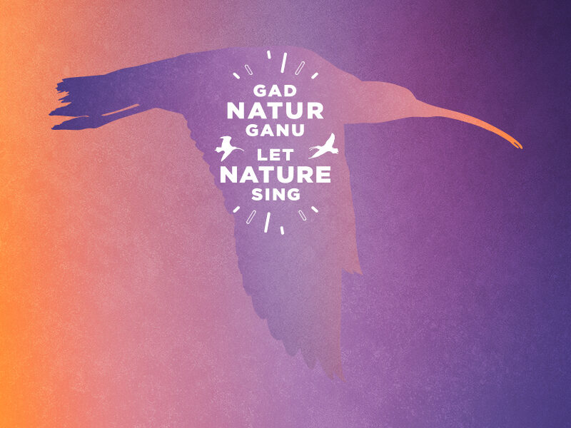 RSPB Let Nature Sing